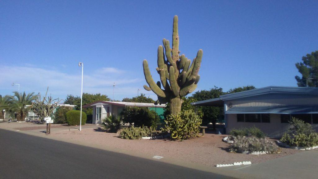 Cactus in Mesa AZ
